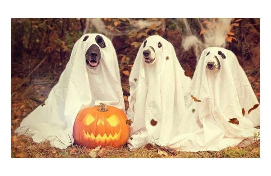 La Fiesta de Halloween en 2021